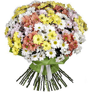 Хризантема кустовая (35 шт.) с доставкой в Брянске